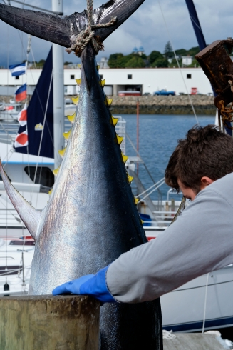 Bluefin Tuna Gloucester Massachusetts copyright Kim Smith - 06