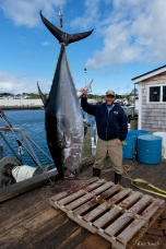 Bluefin Tuna Gloucester Massachusetts copyright Kim Smith - 07