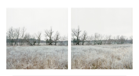 courtesy photo Jane Deering Gallery_Kaveski_Farmland_willows&rime_11.30.08