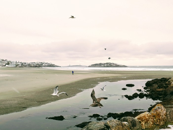 winter view across Good Harbor Beach, gulls, tai chi, Twin Lights © c ryan.jpg