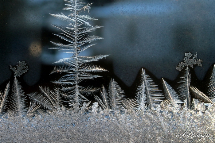 IceCrystals 1-21-20_1527_edited-1.jpg