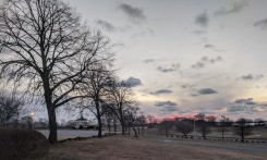 pink sky grey clouds winter trees_February morning Stage Fort Park Gloucester Mass photograph ©c ryan (1)