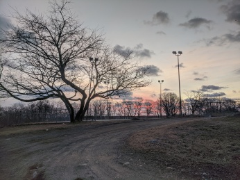 pink sky grey clouds winter trees_February morning Stage Fort Park Gloucester Mass photograph ©c ryan (2)