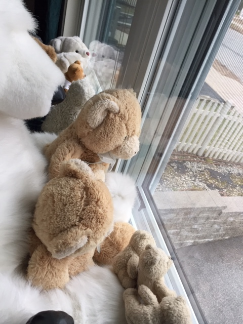 Bears joining in _©k