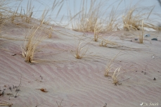 Pink purple sand copyright Kim Smith - 3 of 5