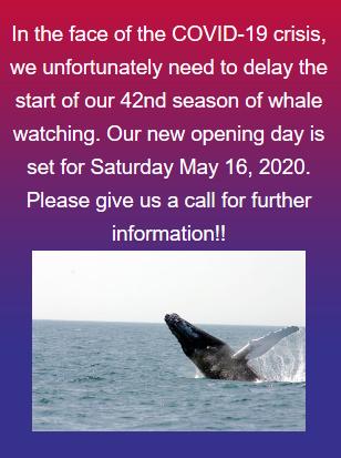 Screenshot_2020-03-31 https www seethewhales com