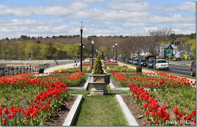2020 5 13 Tulips at Blvd 008