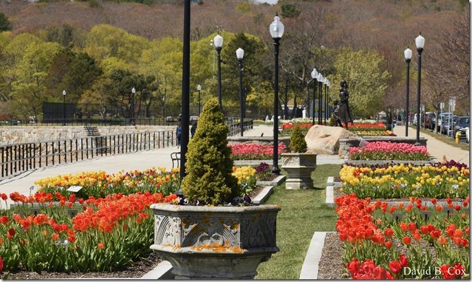 2020 5 13 Tulips at Blvd 012