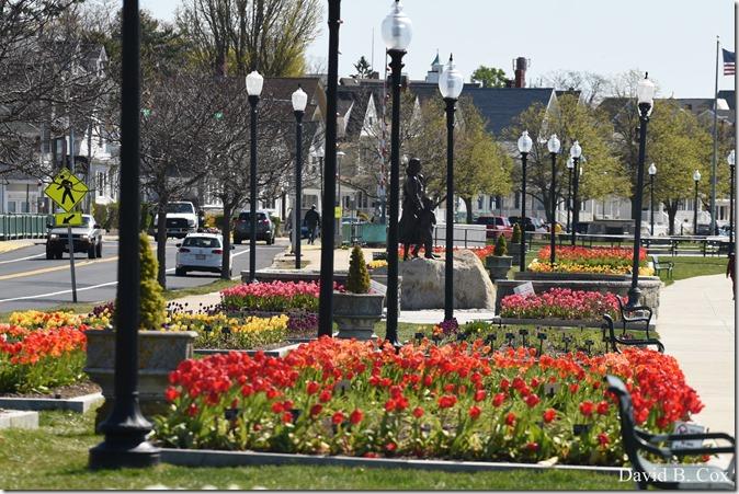 2020 5 13 Tulips at Blvd 089