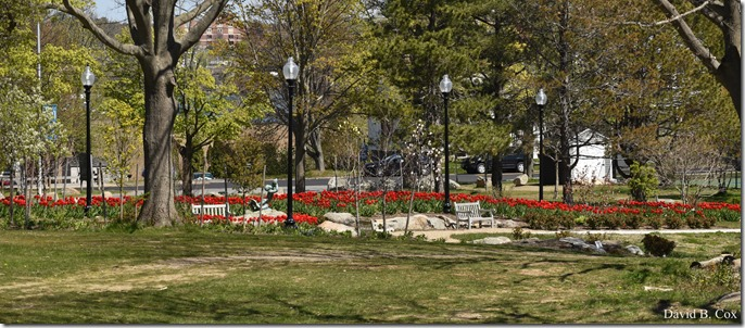 2020 5 13 Tulips at Blvd 139