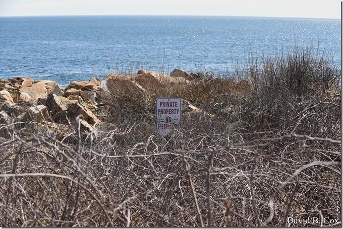 2020 5 5 Back shore Walks 006