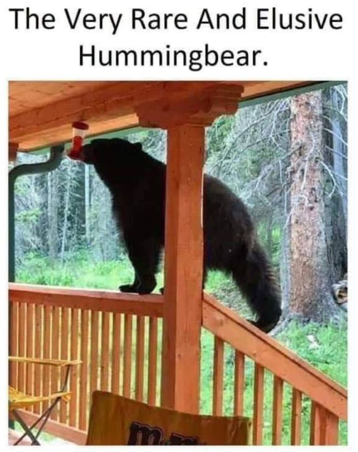 hummingbear