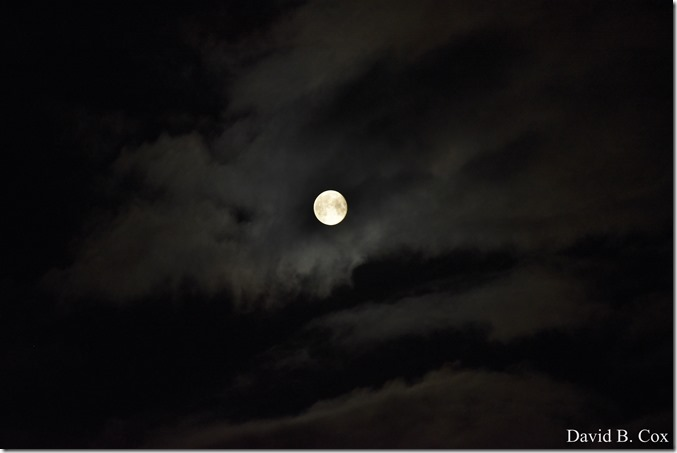 2020 6 7 Full Moon & Sky & Blvd & Floral 068