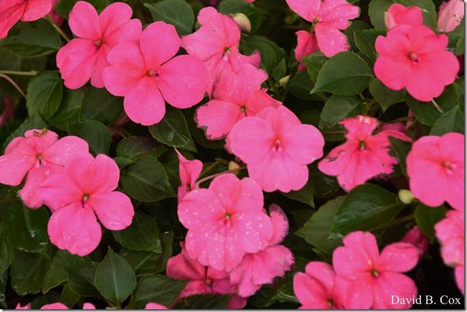 2020 7 17 Family Floral G H Beach 001 - Copy