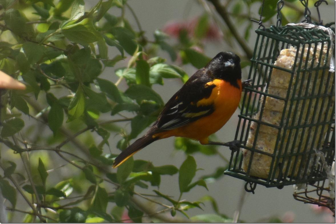 CP Bird1