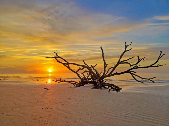 "John Abisamra, ""Sunrise and Driftwood,"" photograph, 18 x 24 inches, $230."