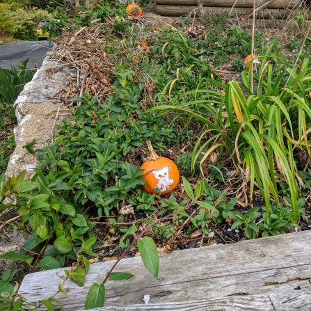 Annual pumpkin patch in the spirit! Halloween 2020_Pumpkin carving_ one house on Main Street annual tradition continues_Gloucester MA ©c ryan (1)