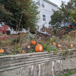Annual pumpkin patch in the spirit! Halloween 2020_Pumpkin carving_ one house on Main Street annual tradition continues_Gloucester MA ©c ryan (3)