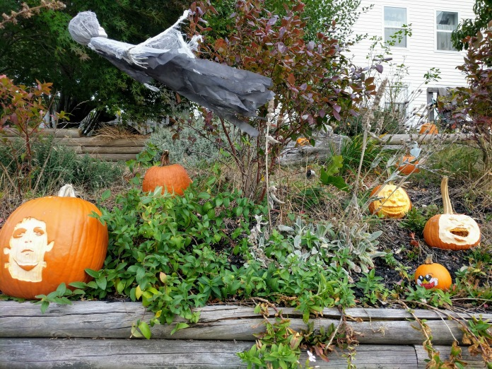 Annual pumpkin patch in the spirit! Halloween 2020_Pumpkin carving_ one house on Main Street annual tradition continues_Gloucester MA ©c ryan