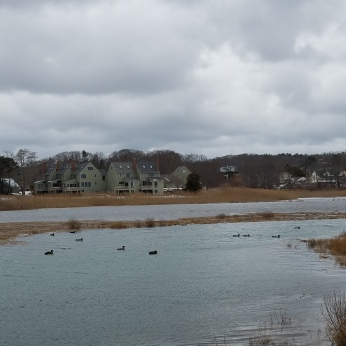 storm no impact yet like water off duck's back _20210201_marsh at the back of good harbor Gloucester Mass ©c ryan