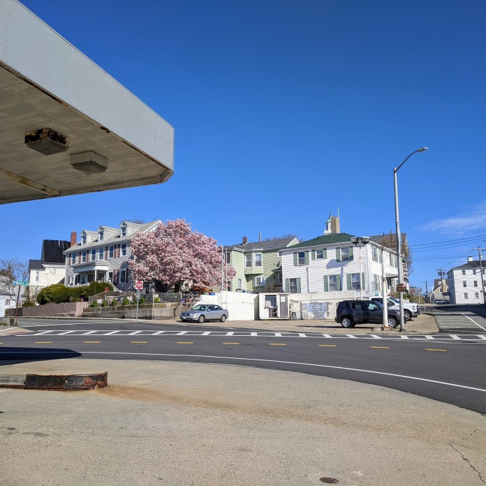 Gloucester Mass. mature magnolia tree _ Angle Washington & Western Ave_view back from Tallys corner_2021 April 23 photo © Catherine Ryan