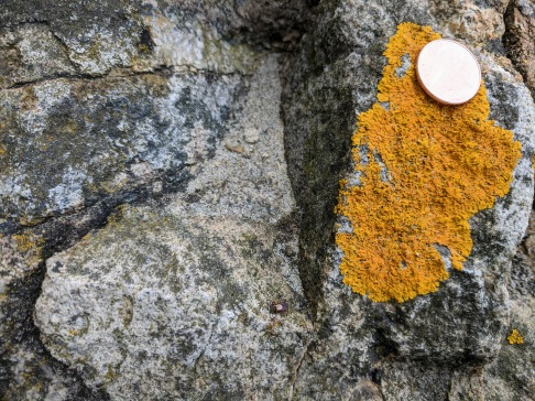 on beach rocks-dog tick _20210516_Gloucester Ma ©c ryan